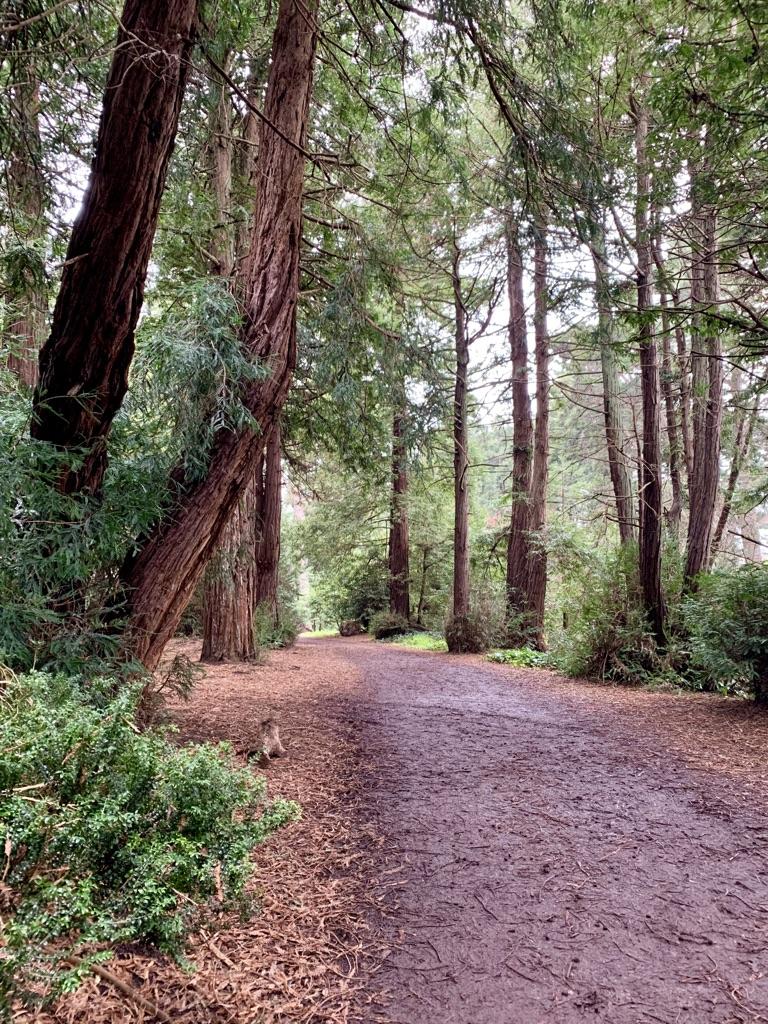 Golden Gate Park footpath